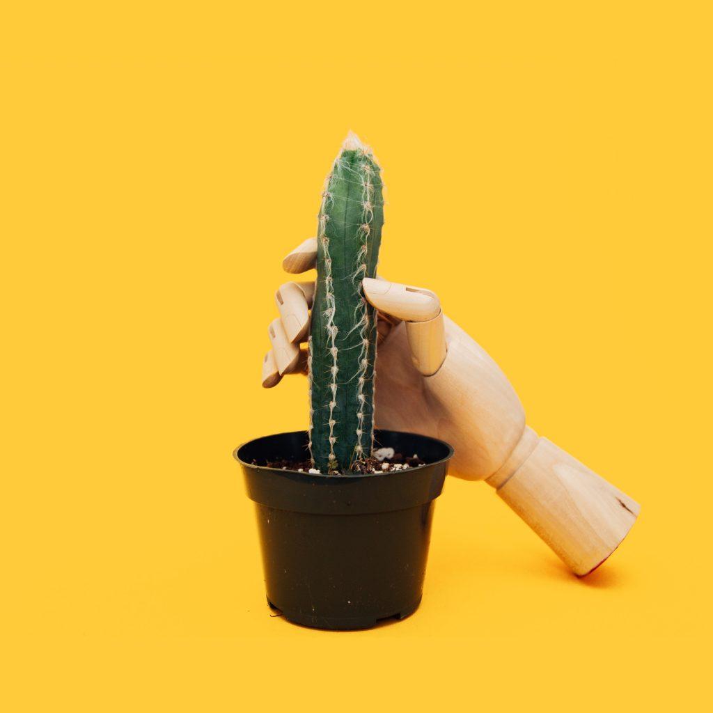 Imatge simbòlica: mà de fusta agafant cactus